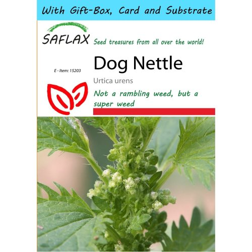 Saflax Gift Set - Dog Nettle - Urtica Urens - 150 Seeds - with Gift Box, Card, Label and Potting Substrate