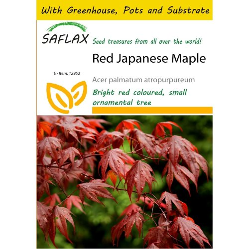 Saflax Potting Set - Red Japanese Maple - Acer Palmatum Atropurpureum - 20 Seeds - with Mini Greenhouse, Potting Substrate and 2 Pots