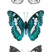 non-woven wallpaper XXL butterflies