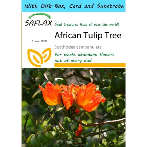 Saflax Gift Set - African Tulip Tree - Spathodea Campanulata - 30 Seeds - with Gift Box, Card, Label and Potting Substrate