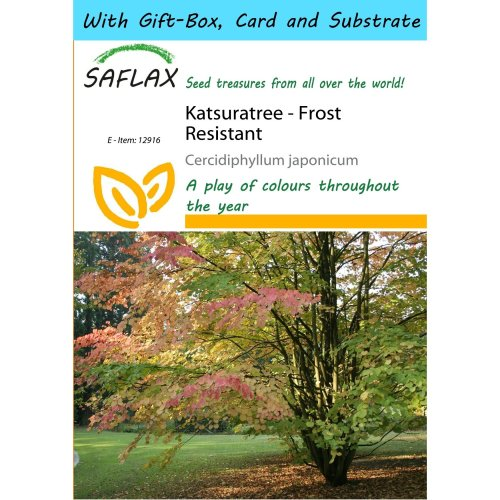 Saflax Gift Set - Katsuratree - Cercidiphyllum Japonicum - 200 Seeds - with Gift Box, Card, Label and Potting Substrate