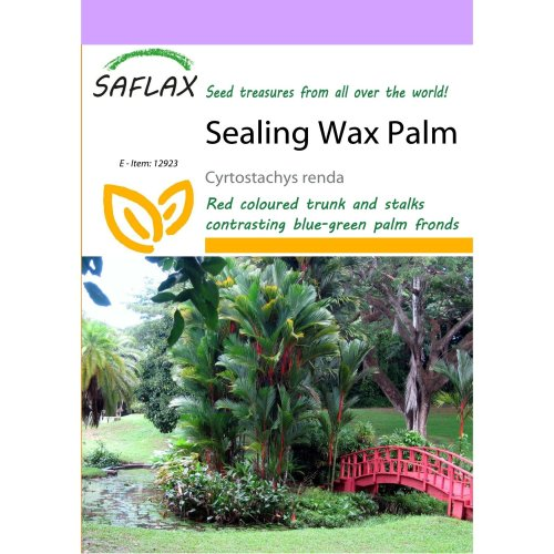 Saflax  - Sealing Wax Palm - Cyrtostachys Renda - 10 Seeds