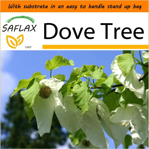 SAFLAX Garden in the Bag - Dove Tree - Davidia involucrata  - 1 seeds - With substrate in a fitting stand up bag.