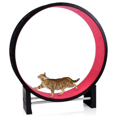 Cat Exercise Wheel Great For Indoor Cats Easily Assembled Promotes Weight Loss