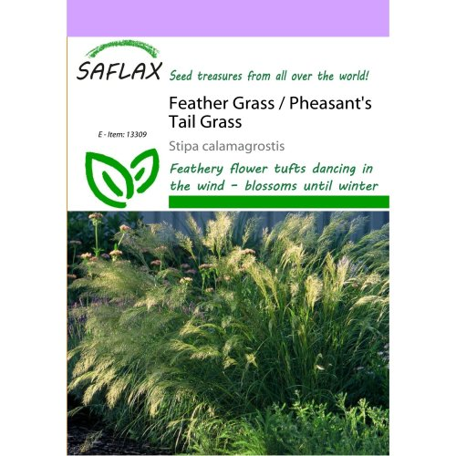 Saflax  - Feather Grass / Pheasant's Tail Grass - Stipa Calamagrostis - 50 Seeds