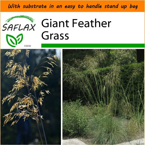 SAFLAX Garden in the Bag - Giant Feather Grass - Stipa - 10 seeds