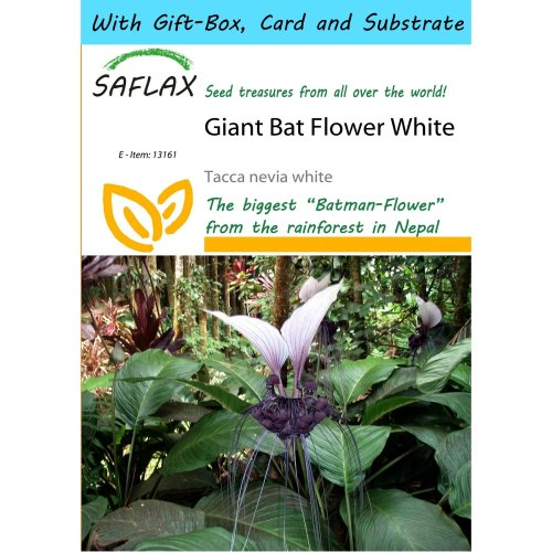 Saflax Gift Set - Giant Bat Flower White - Tacca Nevia White - 10 Seeds - with Gift Box, Card, Label and Potting Substrate