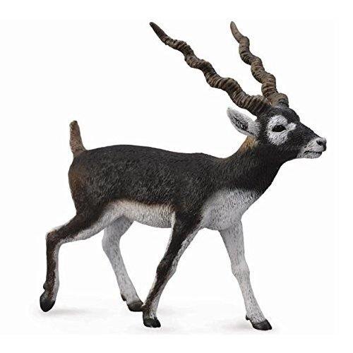 Collecta Wildlife Blackbuck Toy Figure - Authentic Hand Painted Model