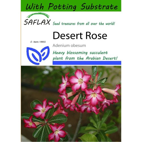 Saflax  - Desert Rose - Adenium Obesum - 8 Seeds - with Potting Substrate for Better Cultivation